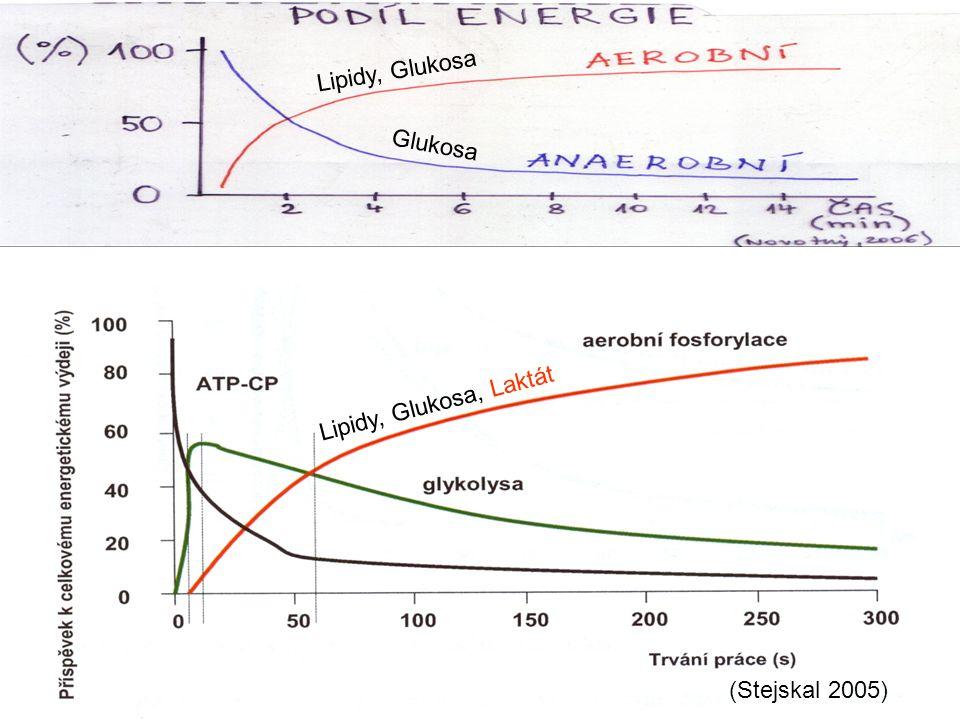 Lipidy, Glukosa Glukosa Lipidy, Glukosa, Laktát (Stejskal 2005)