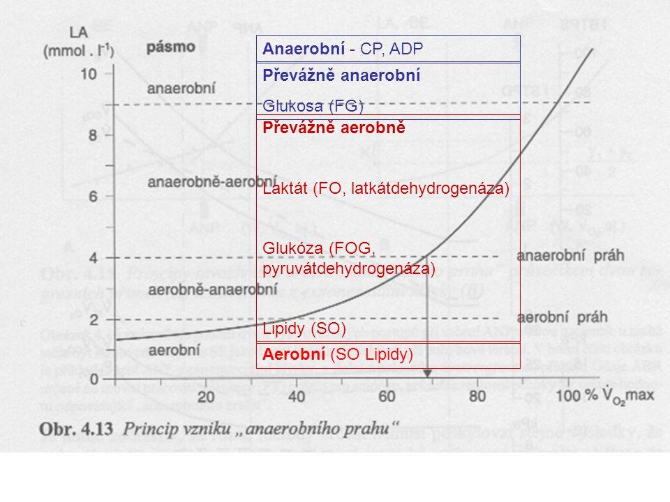 Anaerobní - CP, ADP Převážně anaerobní. Glukosa (FG) Převážně aerobně. Laktát (FO, latkátdehydrogenáza)