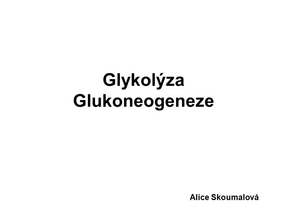 Glykolýza Glukoneogeneze