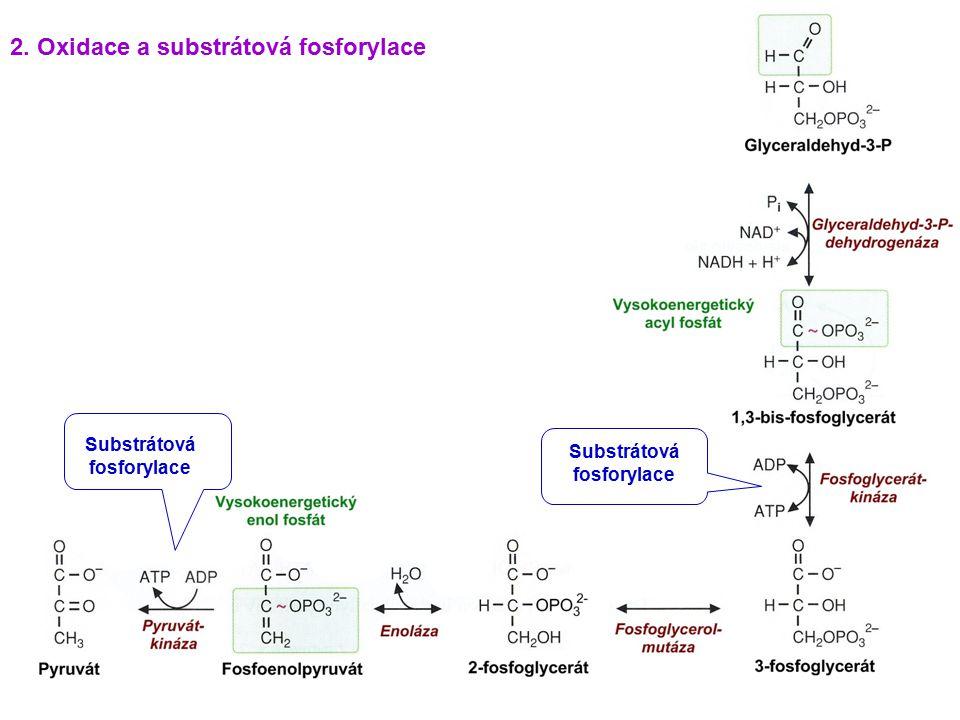 Substrátová fosforylace Substrátová fosforylace