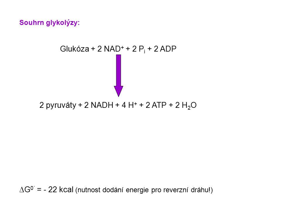 2 pyruváty + 2 NADH + 4 H+ + 2 ATP + 2 H2O