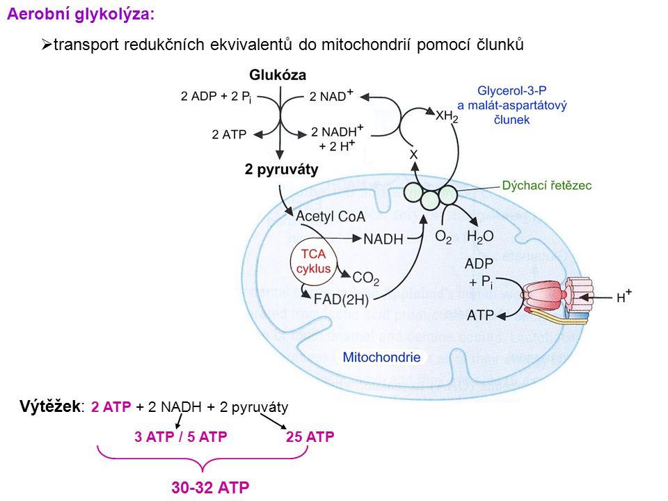 transport redukčních ekvivalentů do mitochondrií pomocí člunků