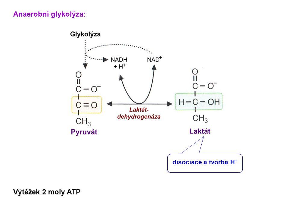 Anaerobní glykolýza: disociace a tvorba H+ Výtěžek 2 moly ATP