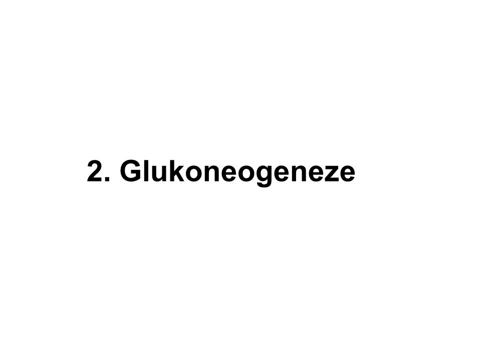 2. Glukoneogeneze