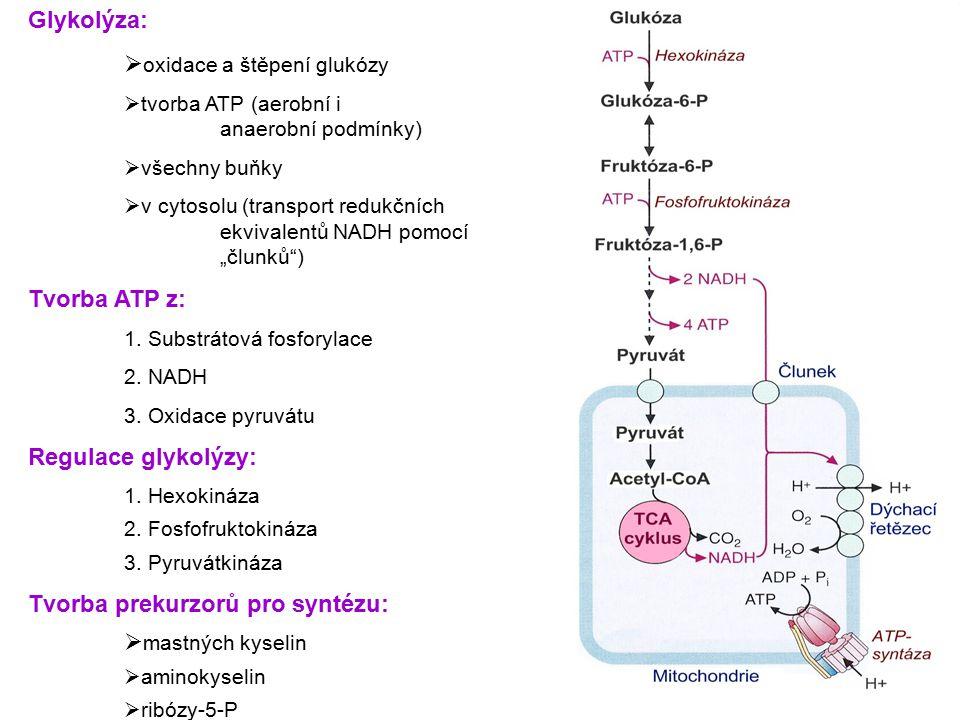 oxidace a štěpení glukózy