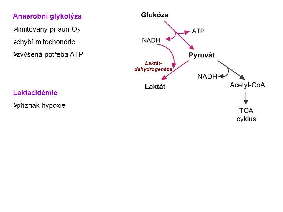 Anaerobní glykolýza limitovaný přísun O2. chybí mitochondrie. zvýšená potřeba ATP. Laktacidémie.
