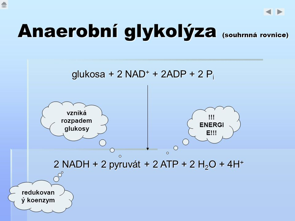 Anaerobní glykolýza (souhrnná rovnice)