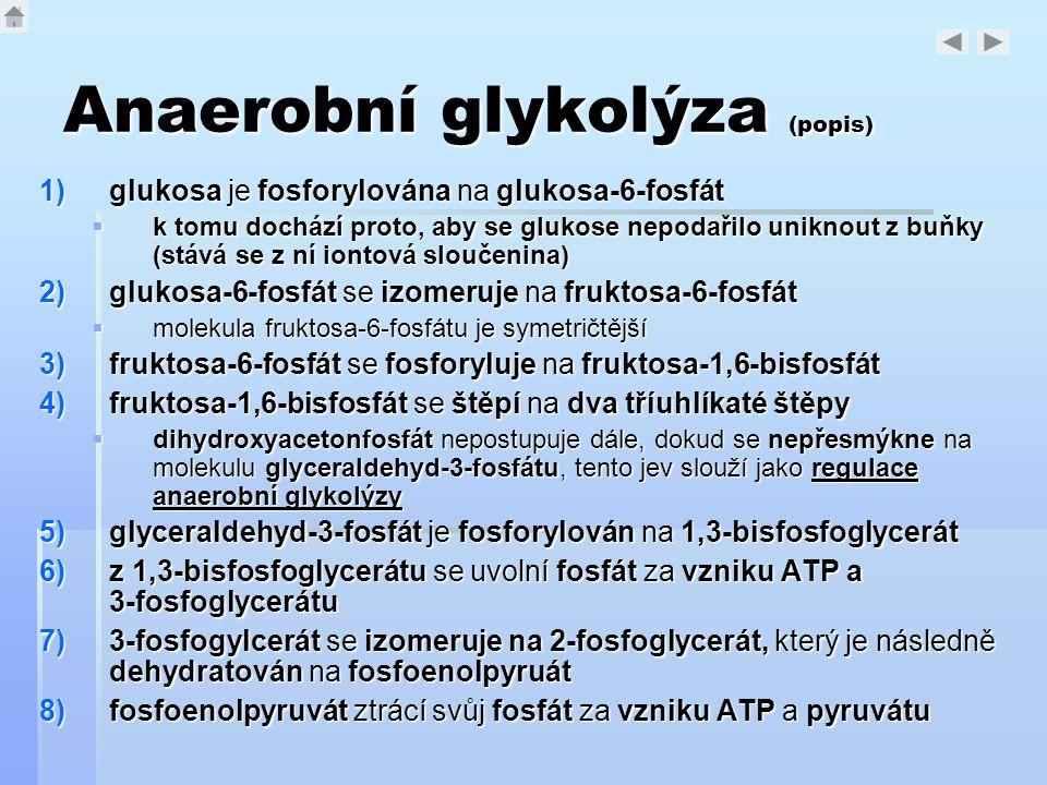 Anaerobní glykolýza (popis)