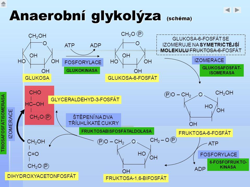 Anaerobní glykolýza (schéma)
