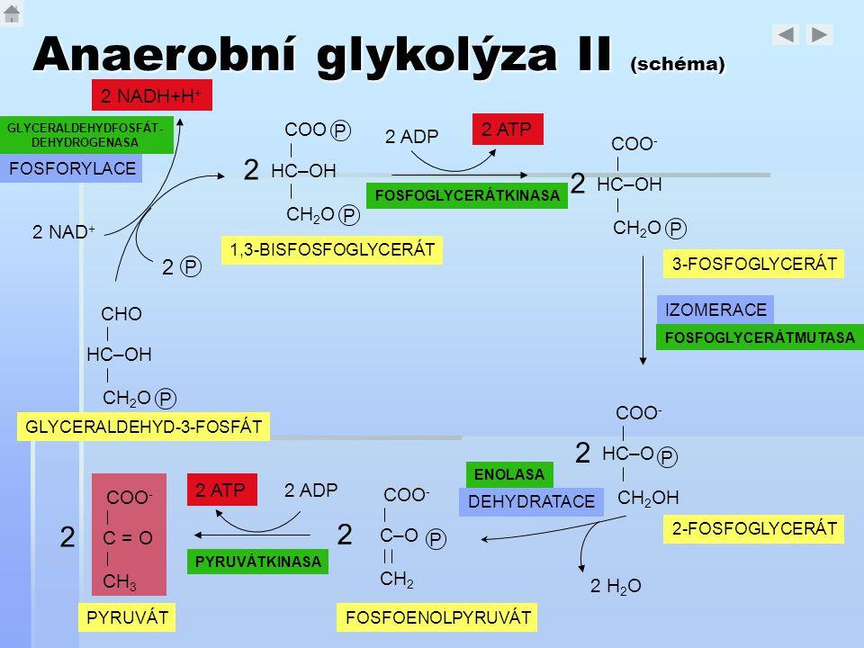 GLYCERALDEHYDFOSFÁT-