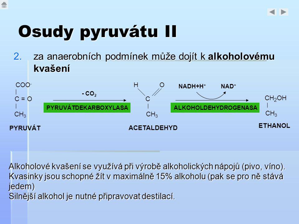 Osudy pyruvátu II za anaerobních podmínek může dojít k alkoholovému kvašení. COO- C = O. CH3. C.