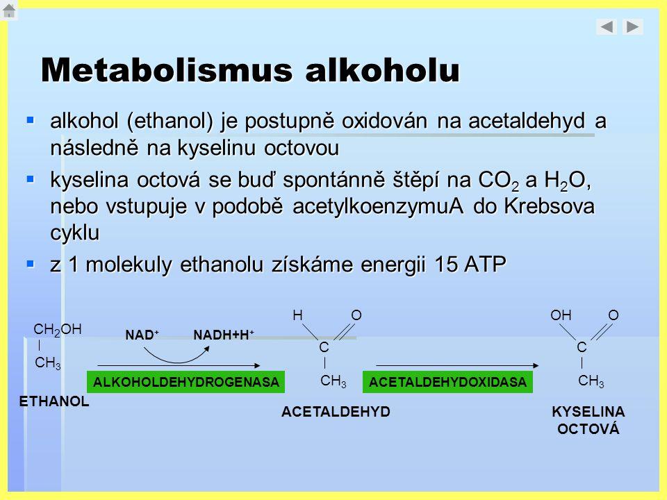 Metabolismus alkoholu