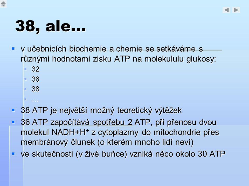 38, ale… v učebnicích biochemie a chemie se setkáváme s různými hodnotami zisku ATP na molekululu glukosy: