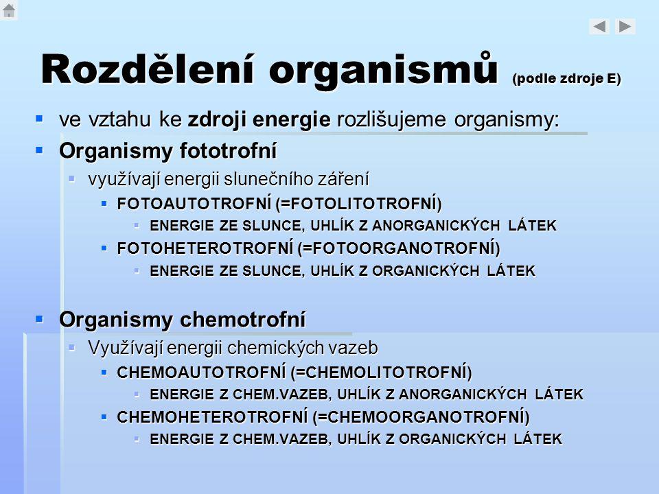 Rozdělení organismů (podle zdroje E)