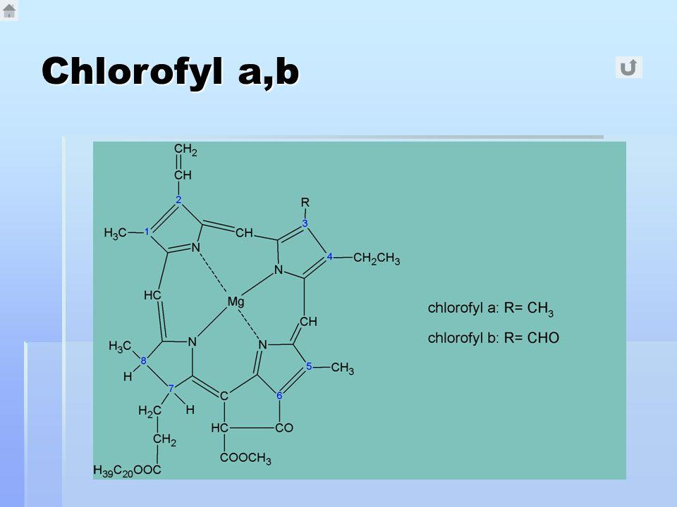 Chlorofyl a,b