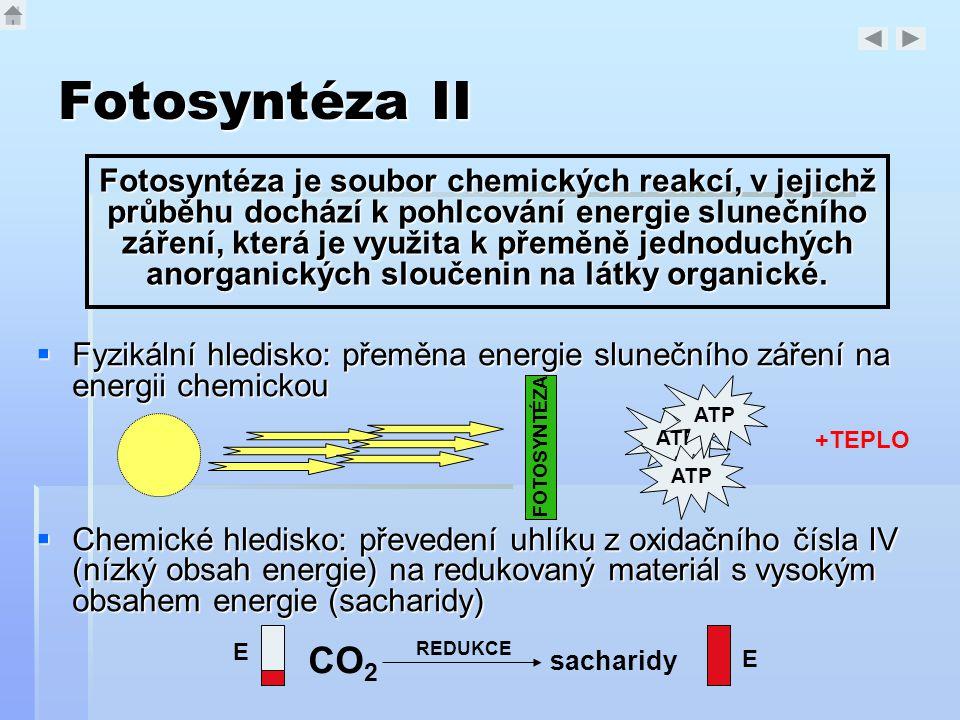 Fotosyntéza II