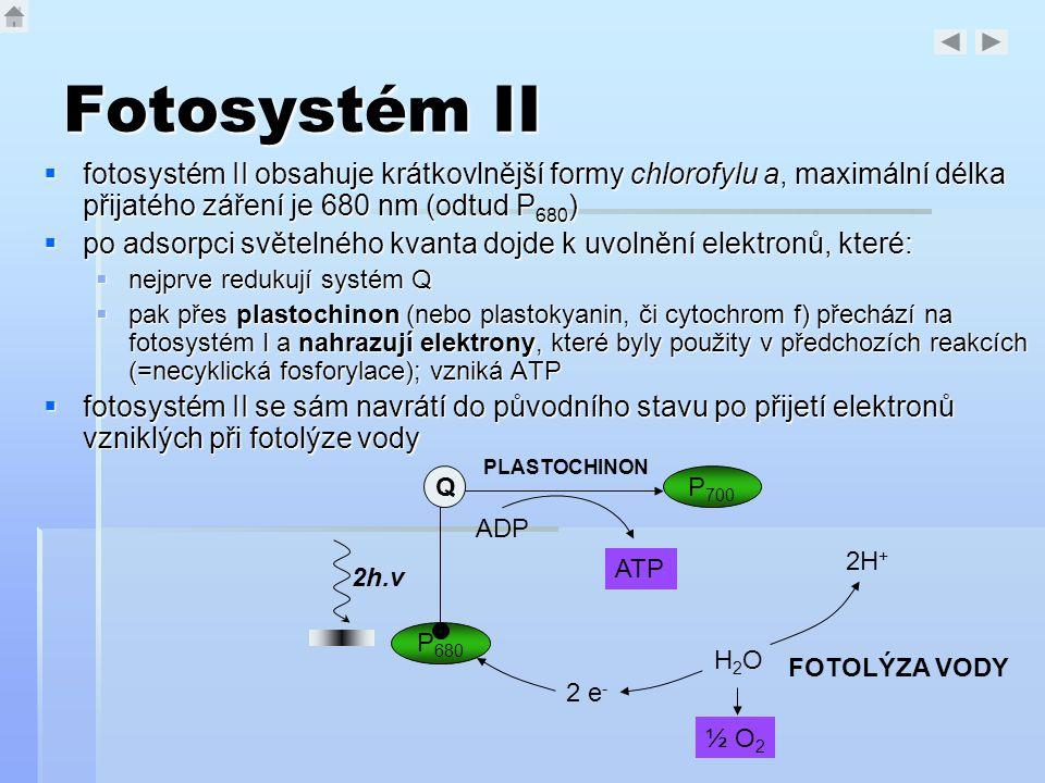 Fotosystém II fotosystém II obsahuje krátkovlnější formy chlorofylu a, maximální délka přijatého záření je 680 nm (odtud P680)