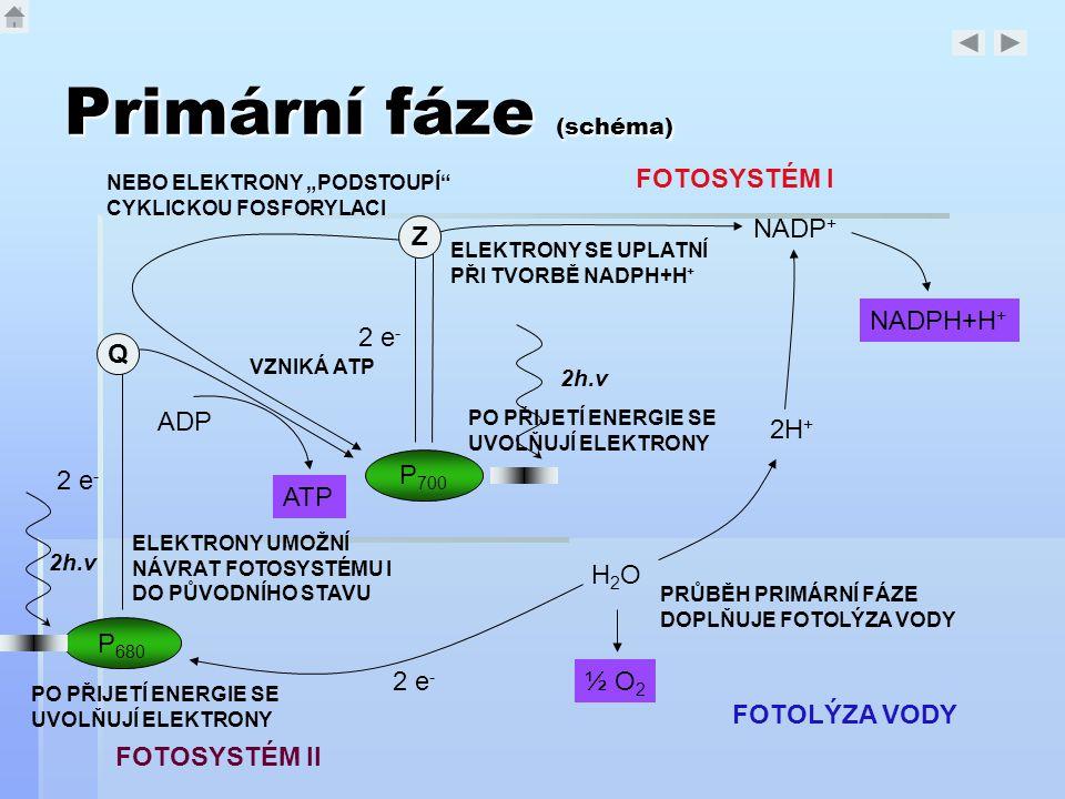Primární fáze (schéma)
