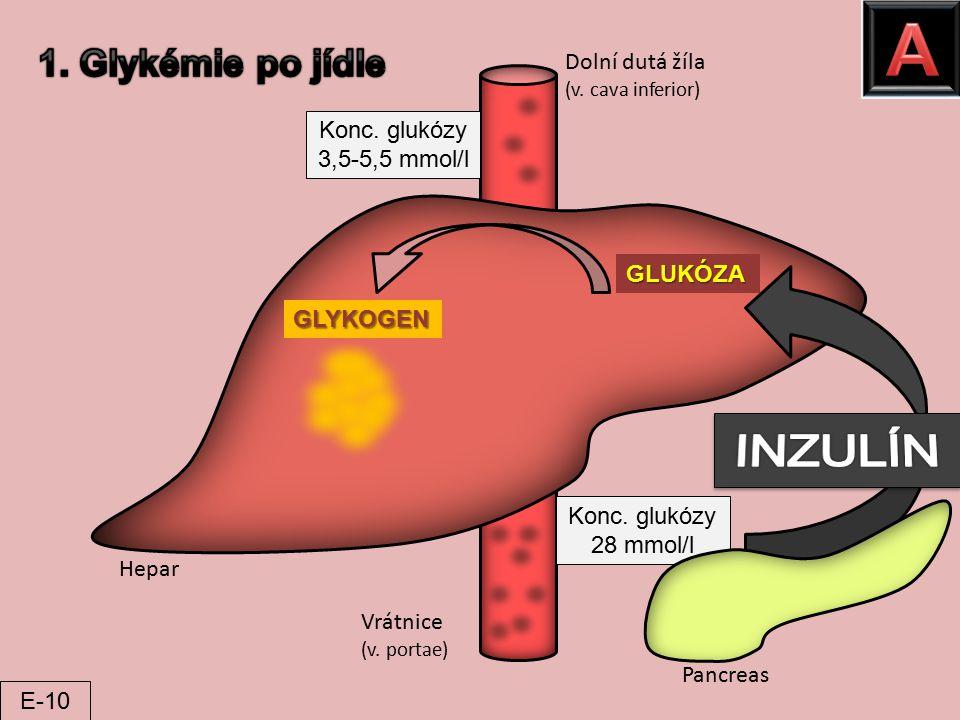 A INZULÍN 1. Glykémie po jídle Dolní dutá žíla Konc. glukózy