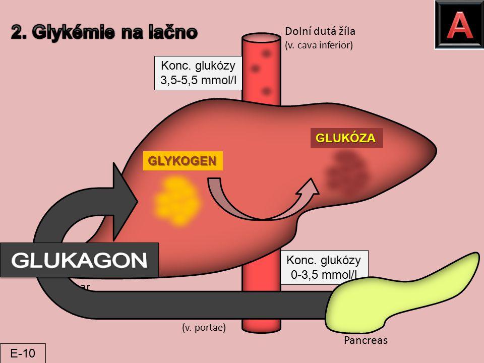 A GLUKAGON 2. Glykémie na lačno Dolní dutá žíla Konc. glukózy