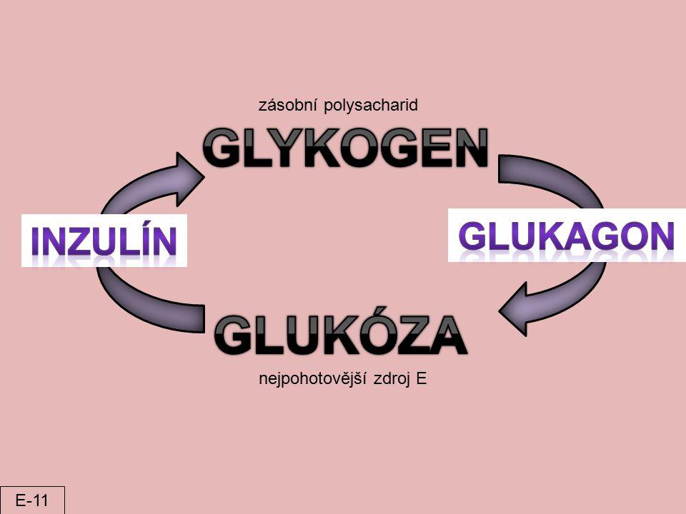 GLYKOGEN GLUKÓZA GLUKAGON INZULÍN zásobní polysacharid