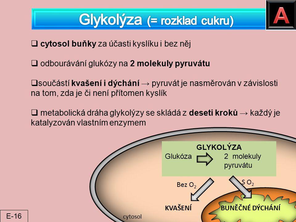Glykolýza (= rozklad cukru)