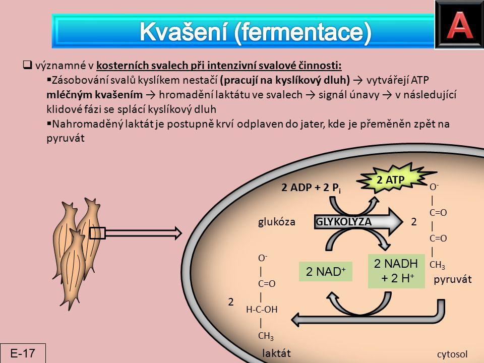A Kvašení (fermentace)