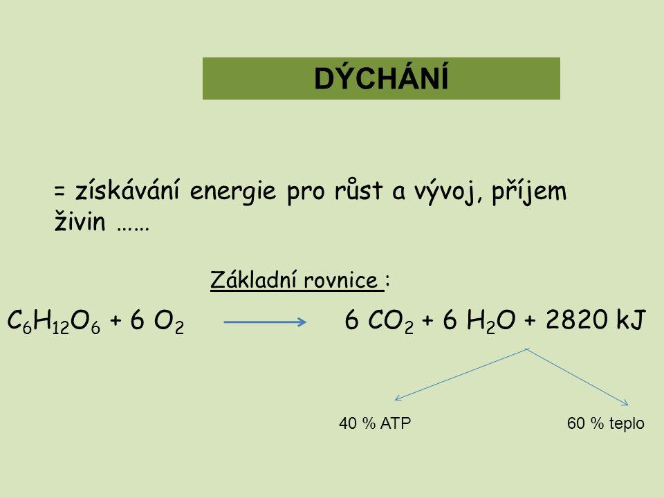 DÝCHÁNÍ = získávání energie pro růst a vývoj, příjem živin ……