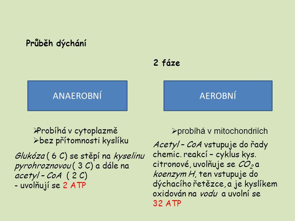 ANAEROBNÍ AEROBNÍ Průběh dýchání 2 fáze Probíhá v cytoplazmě