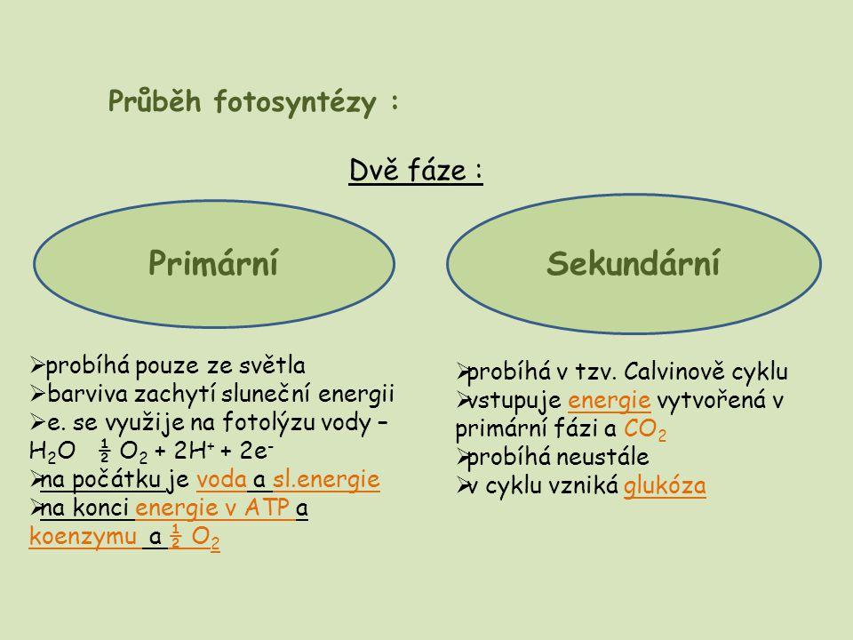 Sekundární Primární Průběh fotosyntézy : Dvě fáze :
