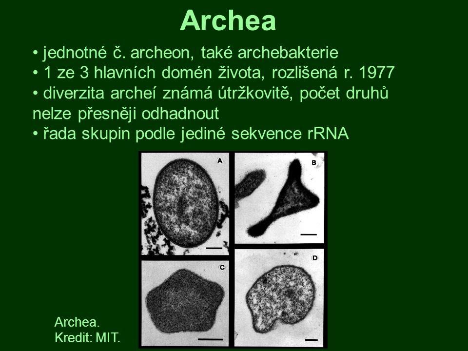 Archea jednotné č. archeon, také archebakterie