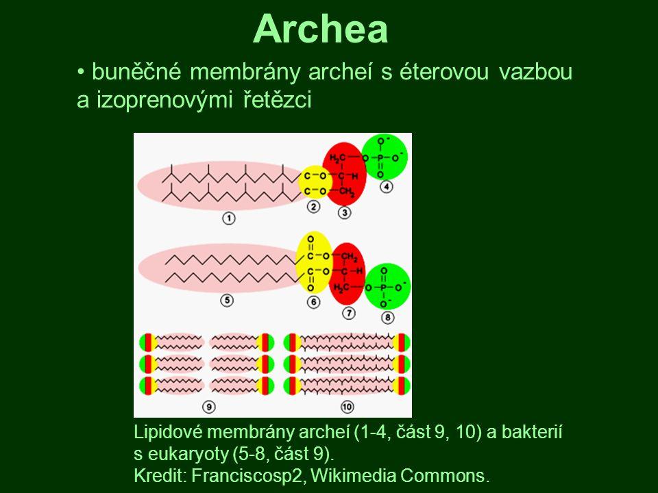 Archea buněčné membrány archeí s éterovou vazbou a izoprenovými řetězci.