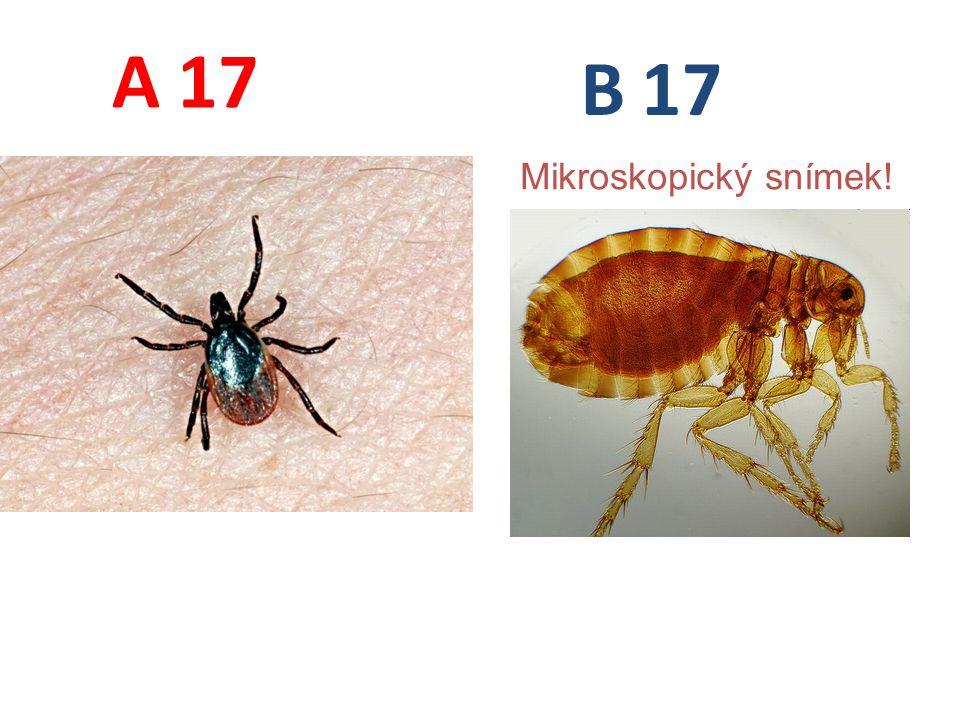 A B 17 Mikroskopický snímek!