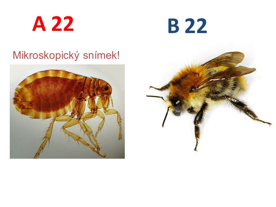 A B 22 Mikroskopický snímek!