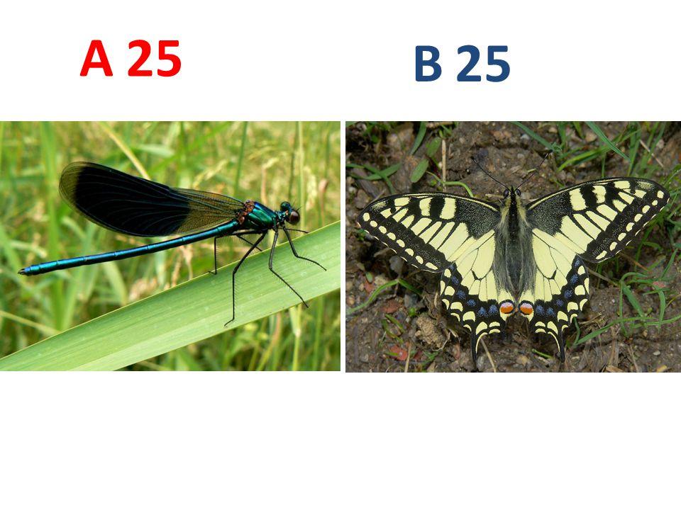 A B. 25. A25: motýlice lesklá, vzdušnicovci, hmyz, vážky, http://www.biolib.cz/IMG/GAL/76361.jpg.