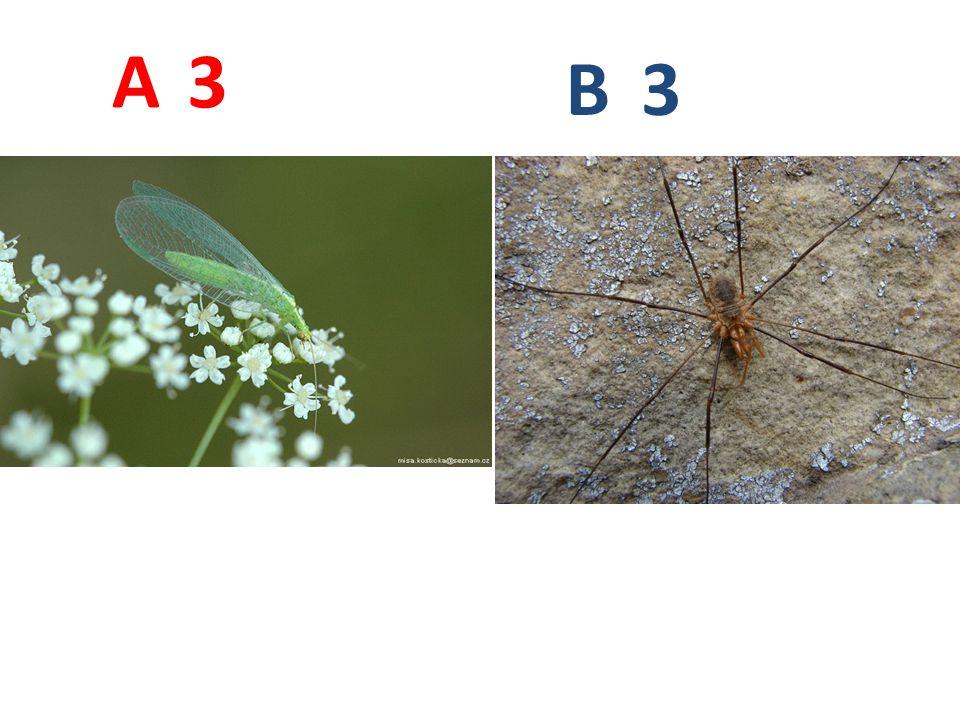 A B. 3. A3: zlatoočka obecná, vzdušnicovci, hmyz, síťokřídlí, http://www.biolib.cz/IMG/GAL/66956.jpg.