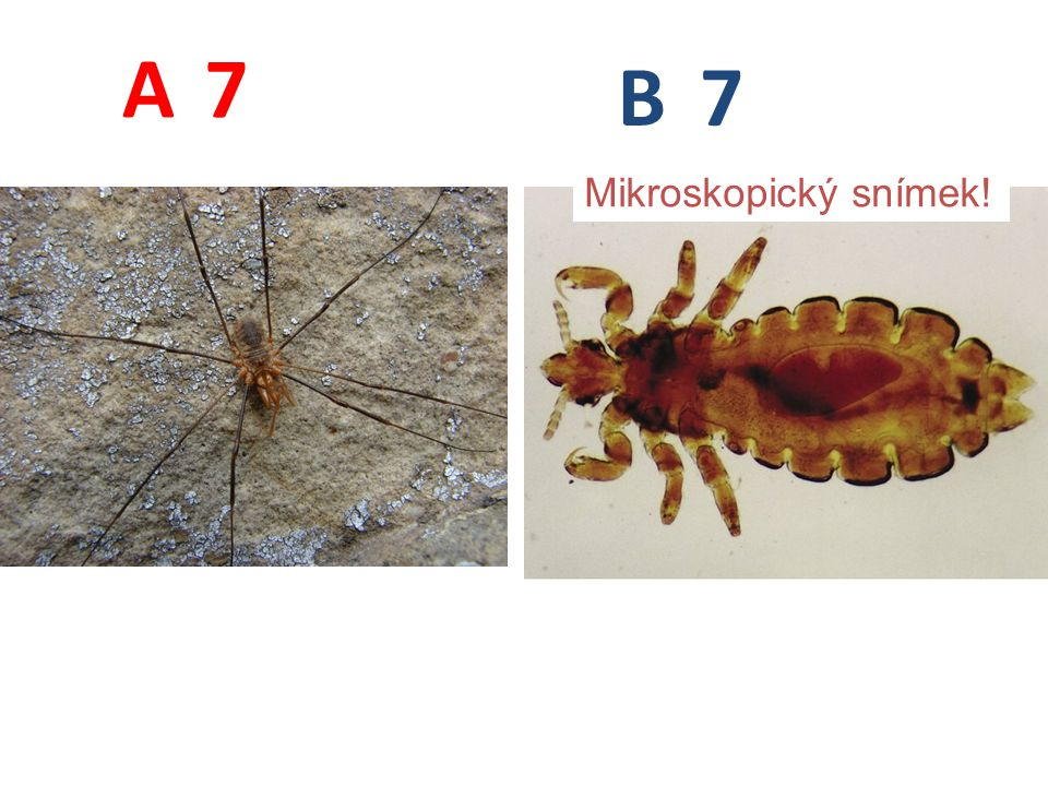 A B 7 Mikroskopický snímek!