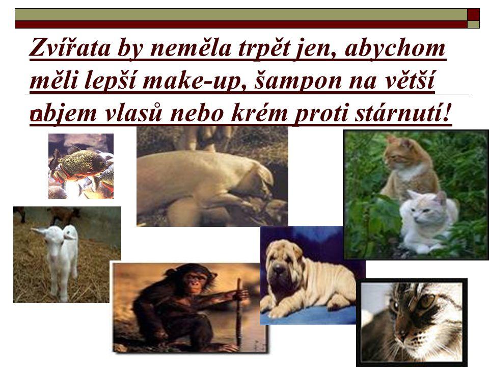 Zvířata by neměla trpět jen, abychom měli lepší make-up, šampon na větší objem vlasů nebo krém proti stárnutí!