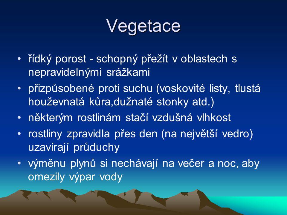 Vegetace řídký porost - schopný přežít v oblastech s nepravidelnými srážkami.