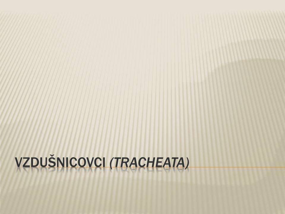 VZDUŠNICOVCI (tracheata)