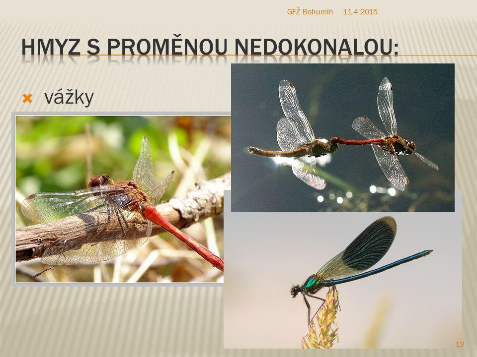 Hmyz s proměnou nedokonalou: