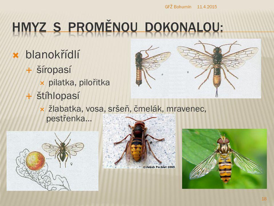 Hmyz s proměnou dokonalou:
