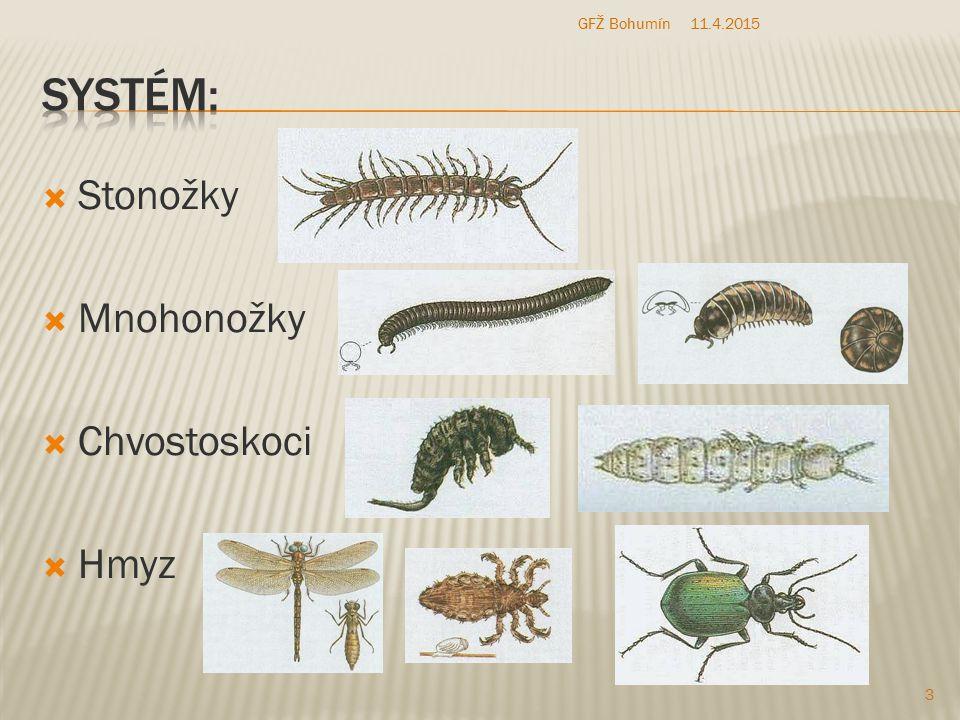 GFŽ Bohumín 10.4.2017 Systém: Stonožky Mnohonožky Chvostoskoci Hmyz