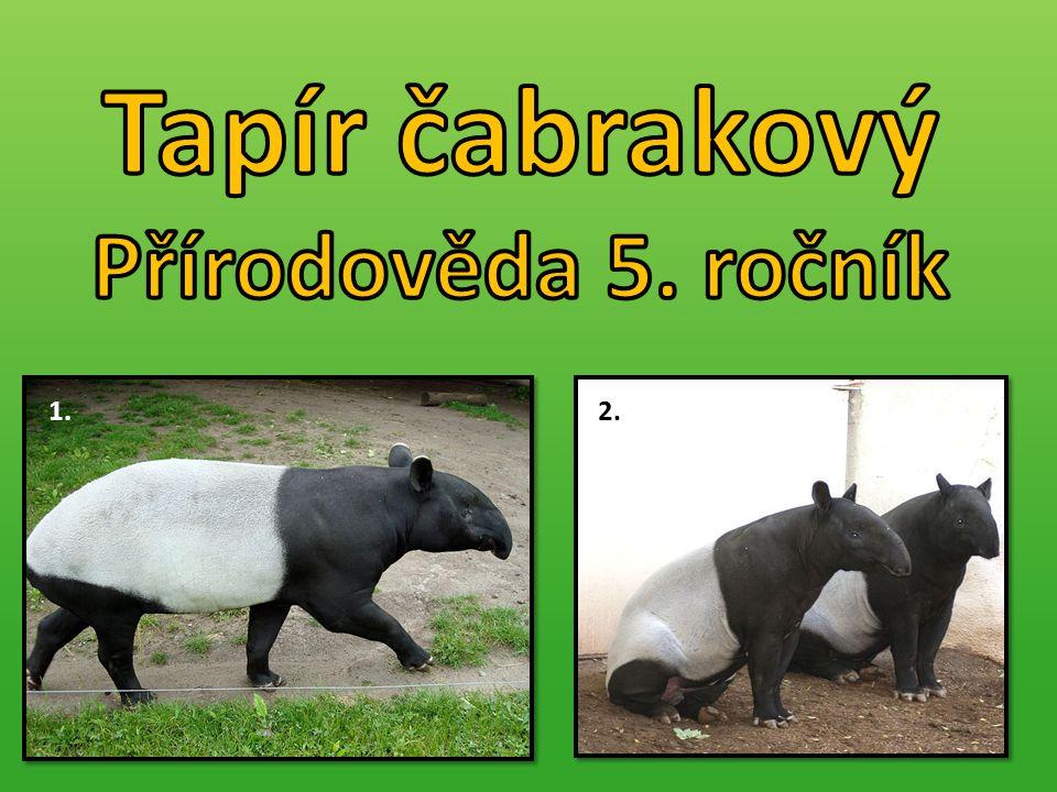 Tapír čabrakový Přírodověda 5. ročník 1. 2.