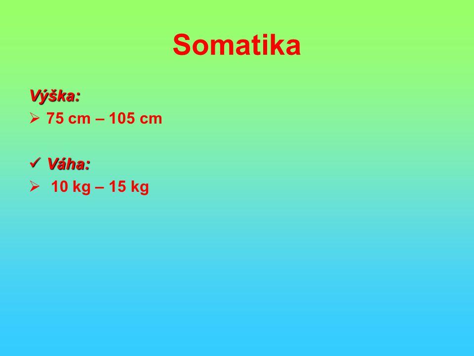 Somatika Výška: 75 cm – 105 cm Váha: 10 kg – 15 kg