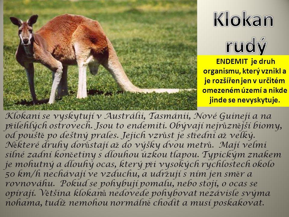 Klokan rudý ENDEMIT je druh organismu, který vznikl a je rozšířen jen v určitém omezeném území a nikde jinde se nevyskytuje.