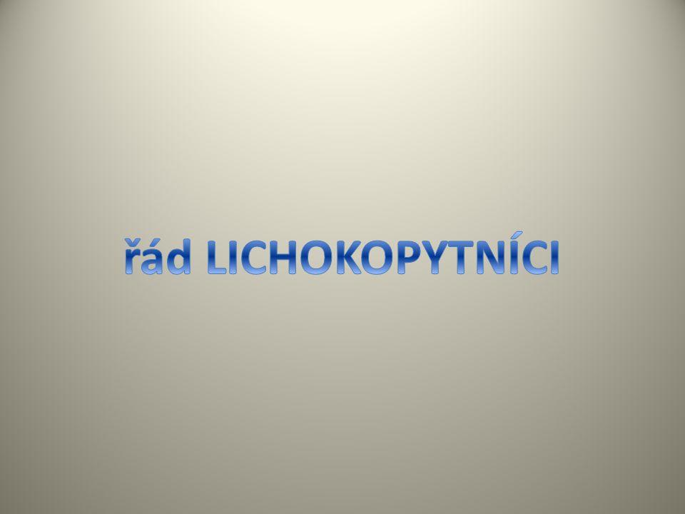řád LICHOKOPYTNÍCI