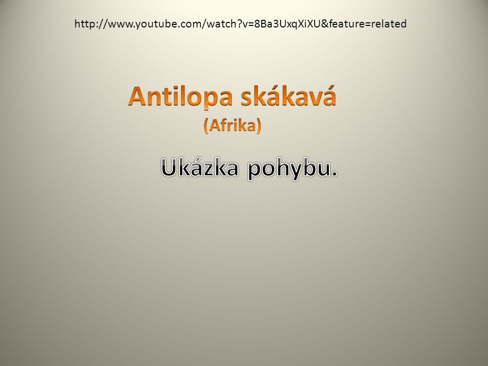 Antilopa skákavá (Afrika)