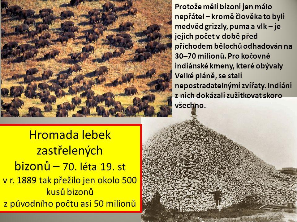 Hromada lebek zastřelených bizonů – 70. léta 19. st