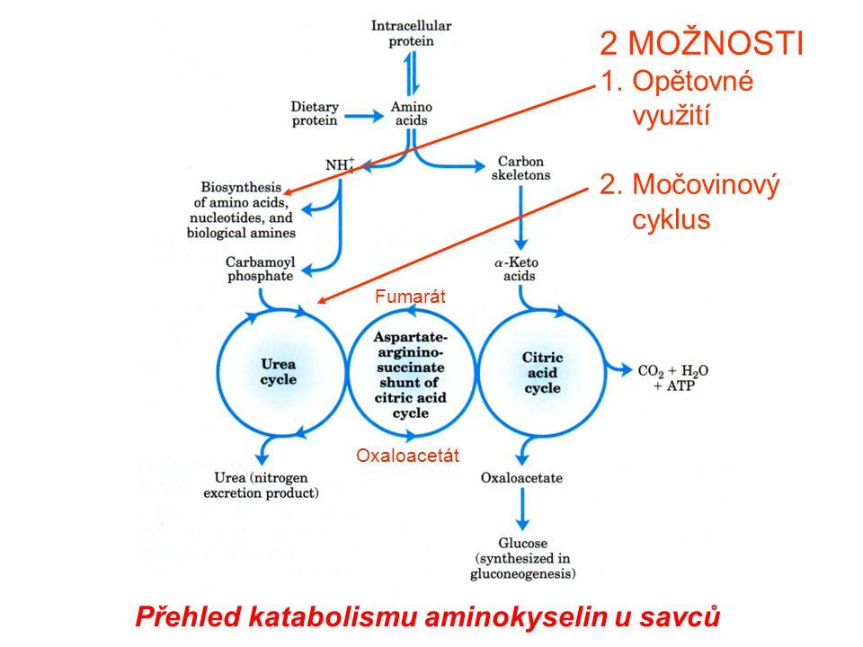 2 MOŽNOSTI Opětovné využití Močovinový cyklus